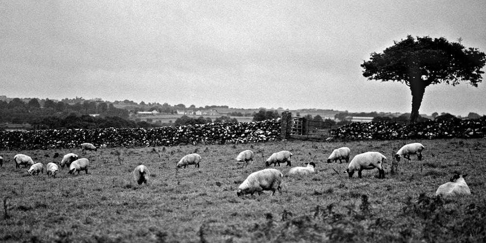Bantry Bay, County Cork, Ireland · Fotograf: Torsten Stoll · neoton photography