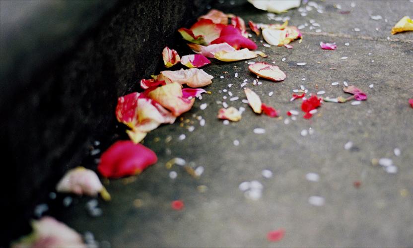 Blütenblätter auf der Treppe